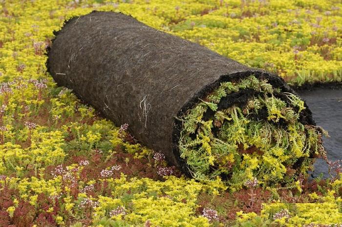 Sedumroll vetplantenmatten (Vegetatiemat, Sedumrol 1.10 x 2.0 meter) Dakbeplanting (groendak, sedumdak, sedumrollen).jpg