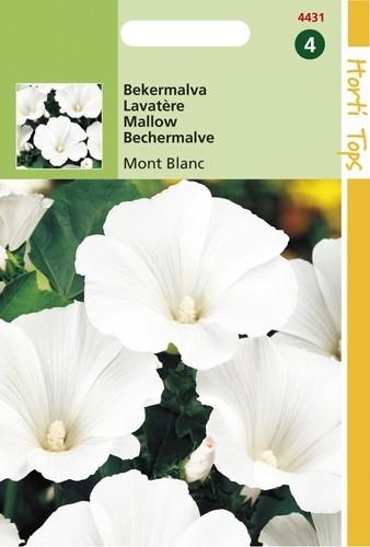 Lavatera trimestris Mont Blanc (zaad Bekermalva, zuiver wit).jpg