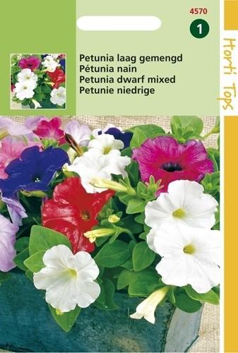 Petunia nana compacta (zaad laag kleurenmengsel).jpg