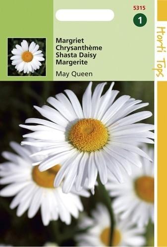 Chrysanthemum leucanthemum May Queen (zaad Margriet).jpg